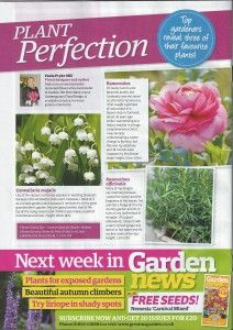 Garden News Paula Pryke