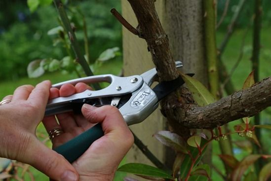 5 B&B Ratchet pruners - old wood
