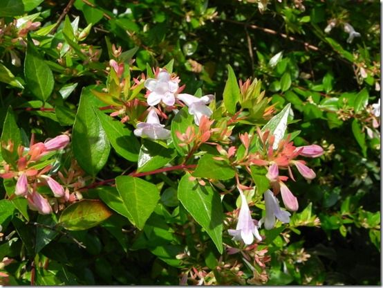 Top ten shrubs for flower arranging in winter gardening the aromatic leaves of the common myrtle have an emerald brilliance lacked by most evergreen shrubs symbolic of life health and wellbeing they are a mightylinksfo