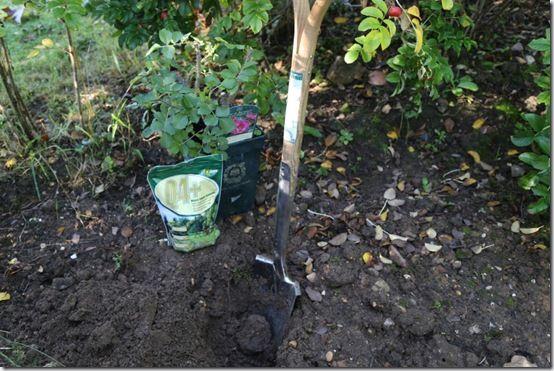 pic. 3 Burgon and Ball Transplanting spade