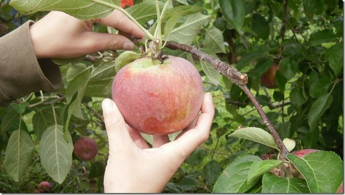 3 Picking an apple