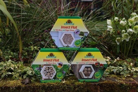 9 Neudorff insect flats (1280x853)