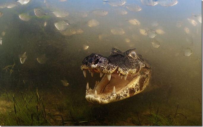 environment-croc-2_2371915k