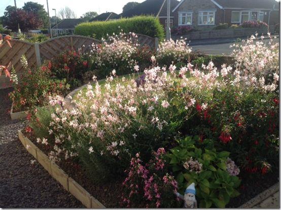 Jamiesherbaceous planting