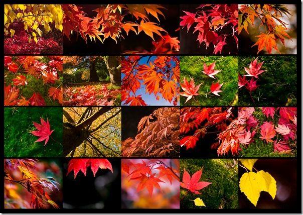 Autumn-3-1