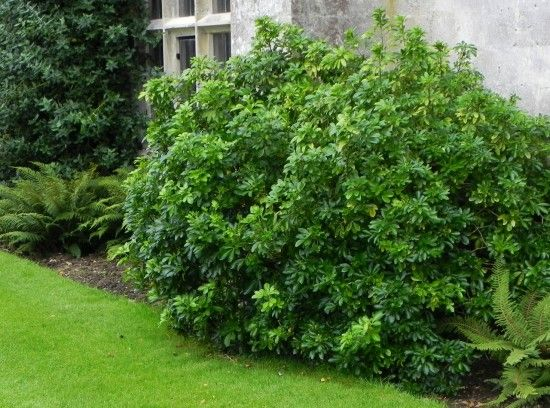 Plants For Narrow Borders Gardening