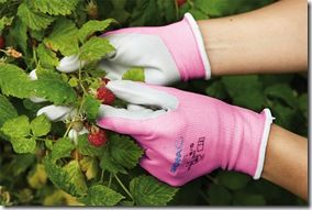 Pickingraspberries