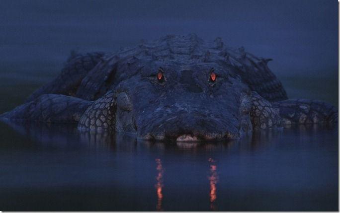 environment-croc_2371890k