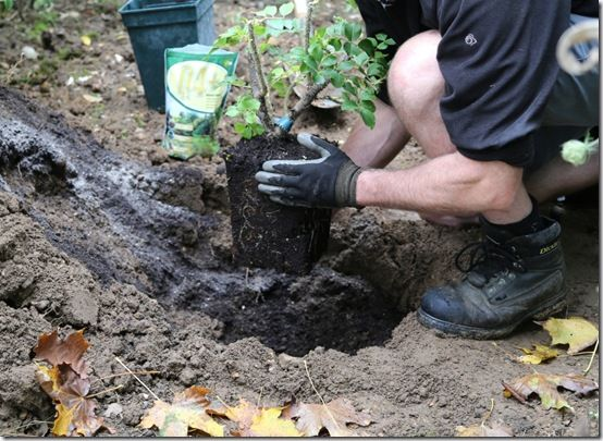 Remove plant from pot and position