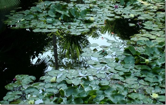9 Reflections in the lily pool