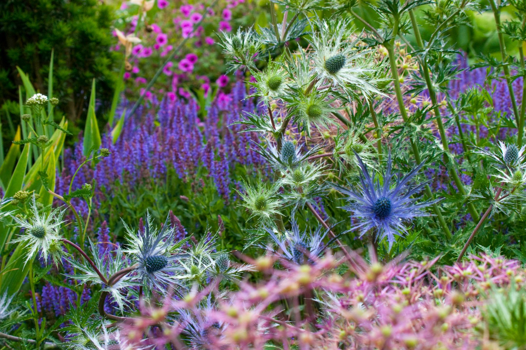 Perennial garden design with dr noel kingsbury for Garden designers at home noel kingsbury