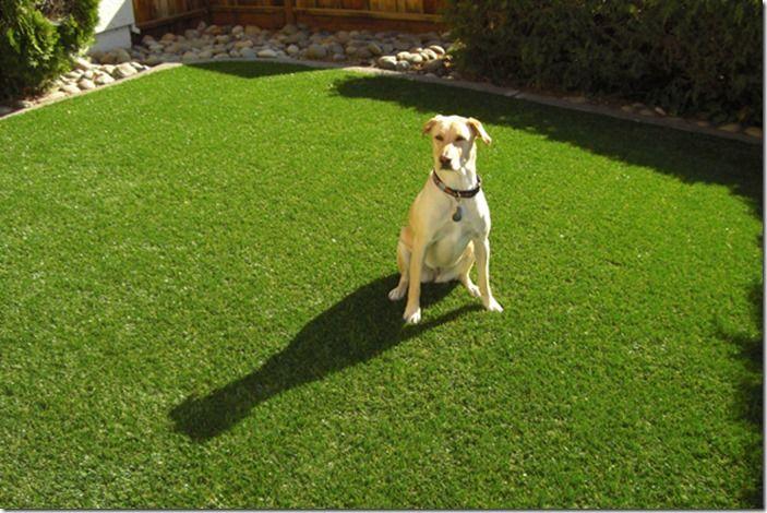 3 Dog on lawn