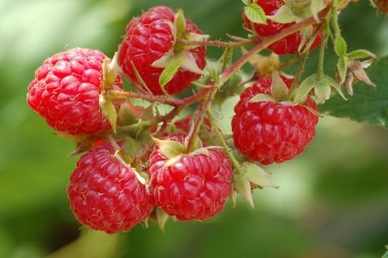 How To Grow Soft Fruit