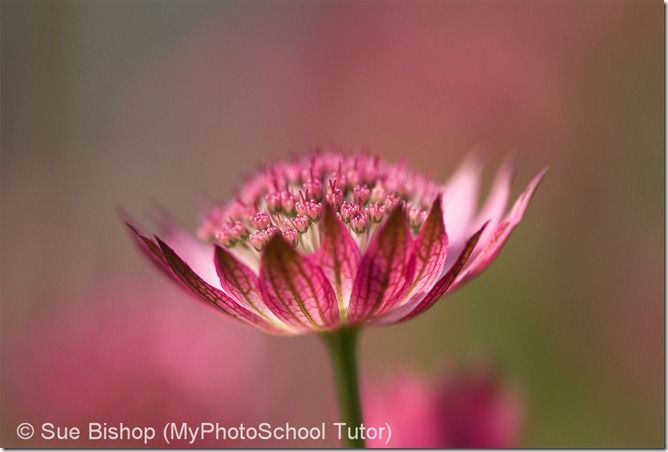 Try and take flower photos on bright overcast days to avoid shaddows spoiling the image.