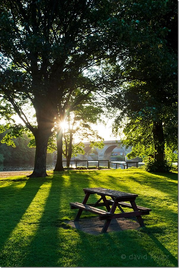 Picnic table and bench on the bank of the River Tyne at Tyne Green, backlit by early-morning summer sunshine, Hexham, Northumberland, Contrast, Exposure, online photography courses, Flare, burnt highlights, historgram, camera flash, shadows,
