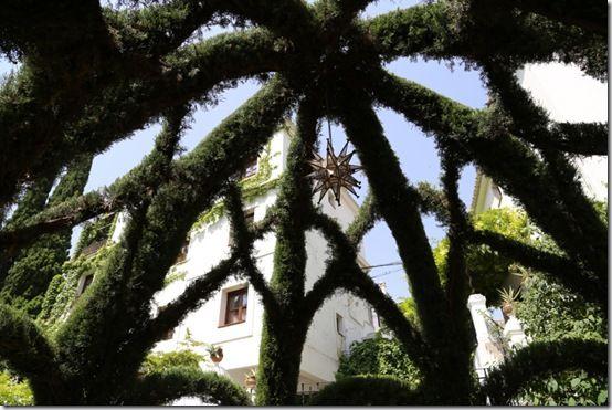 5 Cupressus pavillion roof