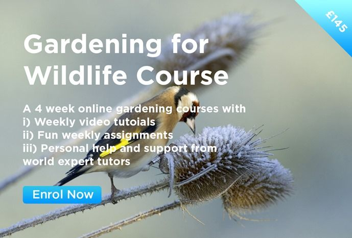 Gardening for Wildlife Course