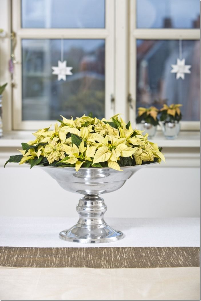 7 White poinsettia decoration (683x1024)