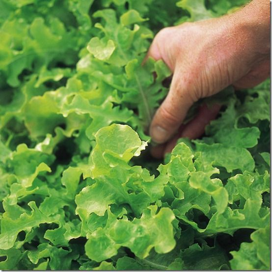 150260_FYS_Lettuce_Salad_Bowl_exp
