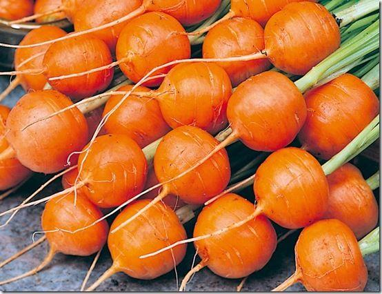 Carrot 'Rondo' - suttons