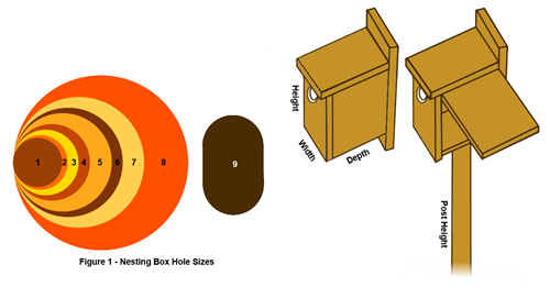 nesting-box-hole-sizes-1.2