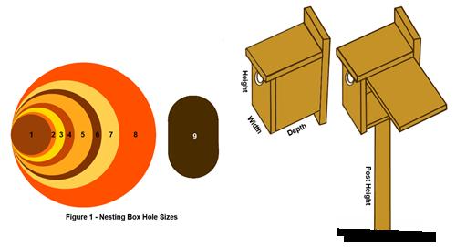 nesting-box-hole-sizes-1.2