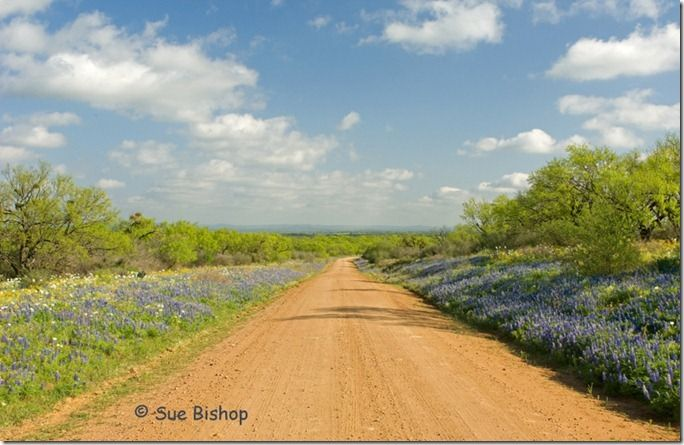 keyserville road, loyal valley, mason county.  mesquite trees, white prickly poppies, cutleaf groundsel, bluebonnets, pepper grass, bladderpod.