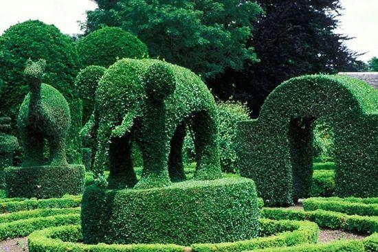 5 Animal topiary