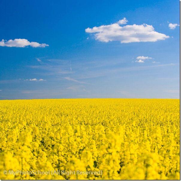 Fields of Rape VX4C1888