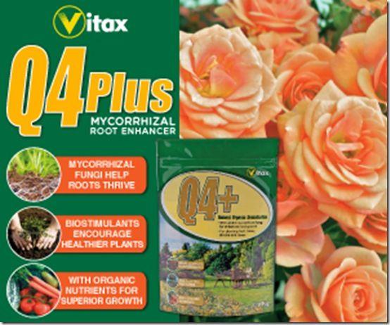 q4plus web ad August 2013