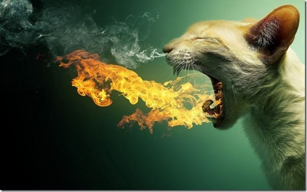 Cat-Photoshop-Manipulation