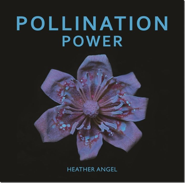 Pollination Power cover