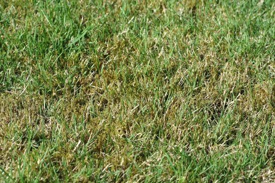 2 Moss infestation