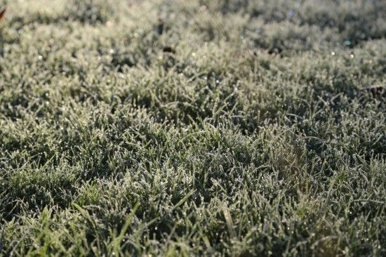 2 Frosted grass (1280x853)