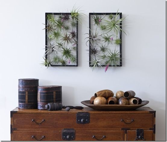Tillandsia wall art