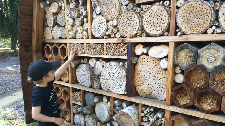 Build a Bee Hotel - Gardening - Learning with Experts