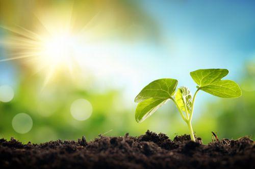 Midsummer Vegetable Sowing
