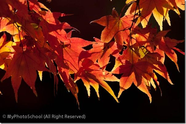 Autumn Home00012