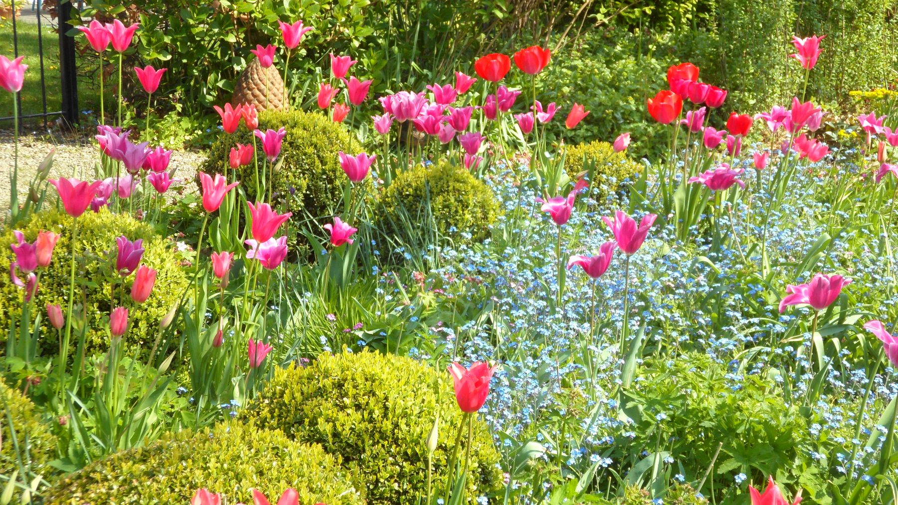 Spring Flowering Bulbs With Perennials
