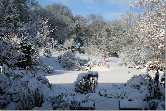 Sandhill Snow scene