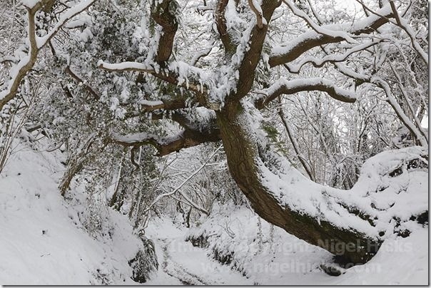 A woodland lane in snow at Mintern Magna, near Sherborne, Dorset, Great Britain.,  calendars, How to publish a calendar, How to Publish a Photography Calendar, Higel Hicks Dorcet Light, Somerset Light, Devon Light,
