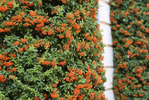 Plants For Shady Walls