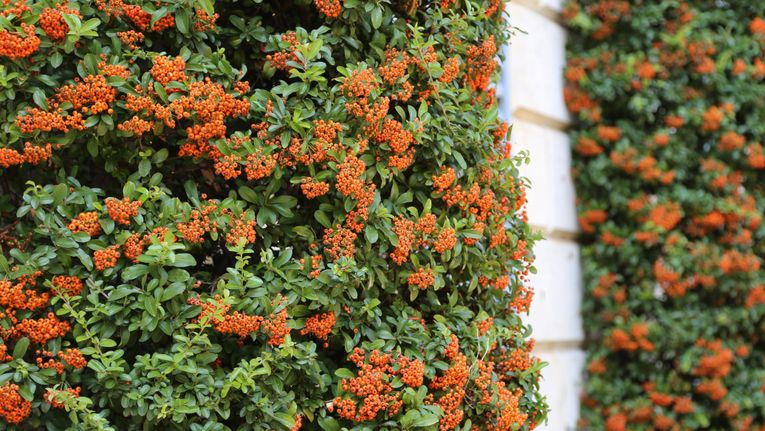 Plants For Shady Walls Gardening Learning With Experts
