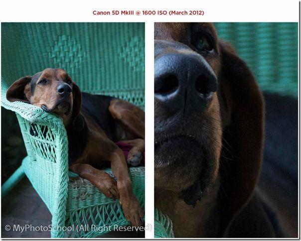 Canon ISO Camera Comparison