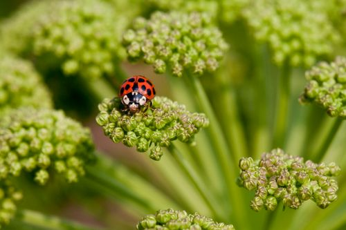 How to Encourage Beneficial Insects in Your Garden