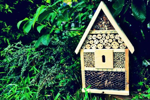 How to attract beneficial insects to your garden: with an insect hotel