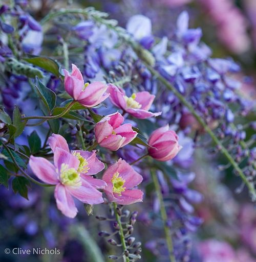 How to Shoot Early Spring Flowers