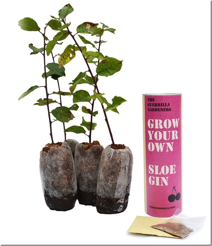10 Grow-your-own sloe gin