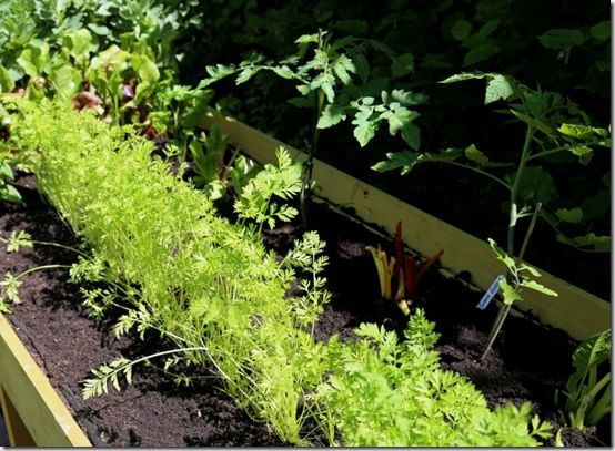 8 The replanted Vegtrug