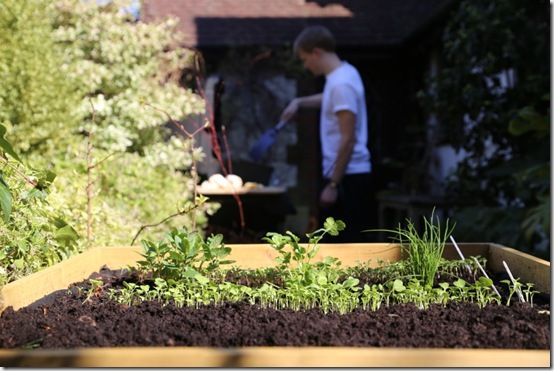 Herbs near the barbecue